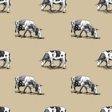 Domestic cows seamless pattern hand drawn in a graphic style. Vintage digital engraving illustration for poster, web