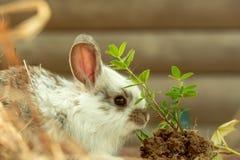 Domestic cute rabbit Royalty Free Stock Photo