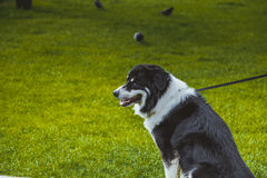 Domestic dog Royalty Free Stock Photos