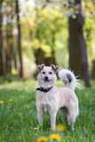 Domestic dog enjoying nature Stock Photography
