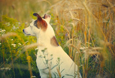 Domestic dog Stock Images