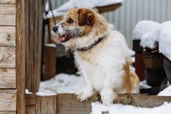 Domestic dog guarding home stock image