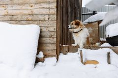 Domestic dog guarding home royalty free stock photos