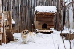 Domestic dog guarding home stock photos
