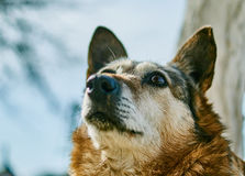 The domestic dog is a mongrel. Royalty Free Stock Images