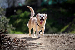 Domestic dog on the nature Stock Images