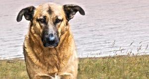 Domestic dog Stock Photos