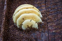 Domestic domestication of honey bees. Domestic domestication honey bees green color yellow review royalty free stock photography