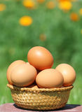 Domestic eggs Royalty Free Stock Image