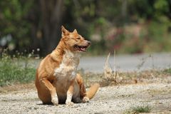 Fat happy dog. Domestic fat dog happy dog royalty free stock images