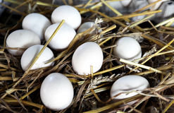 Domestic fowl eggs on hay Royalty Free Stock Photography