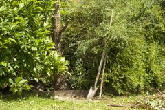 Domestic gardening and tree cutting. A domestic garden needs a bit of work on a hot summers day royalty free stock images