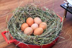 Domestic hens nest with brown eggs at home surroundings. Still life composition stock images