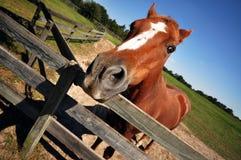 A domestic horse Stock Photo