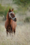 Domestic horse Royalty Free Stock Image