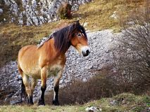 Domestic horse grazing in the mountains in autumn. stock images