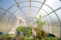 Domestic hothouse. With plants and seedings at spring royalty free stock photo