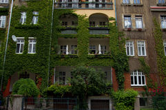 Domestic House Covered by Ivy Royalty Free Stock Photography
