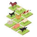Domestic isometric animals Stock Images