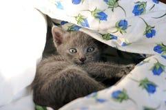 Domestic kitten. Portrait of cute domestic kitten stock photography