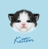 Domestic Kitten Portrait. Vector Illustration. Stock Photo