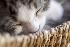 Domestic kitten sleeping stock photo