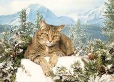 Domestic Mountain Lion Royalty Free Stock Photo