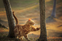 Domestic orange fur cat relaxing in park with beautiful morning Stock Image