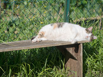 Domestic pet cat sleeping in the sun. Royalty Free Stock Photography