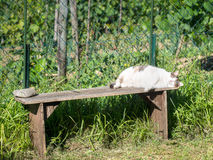 Domestic pet cat sleeping in the sun. Stock Photography