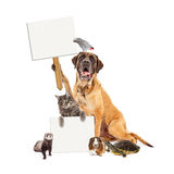 Domestic Pet Group With Blank Signs Royalty Free Stock Image
