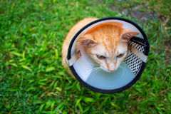 Domestic pet after surgery in veterinarian clinic. Cute sad kitty in protective cover on neck. Stock Image