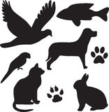 Domestic Pets
