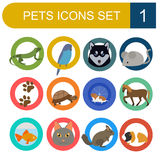 Domestic pets and vet healthcare flat icons set Royalty Free Stock Photos