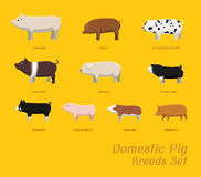Domestic Pig Breeds Set Cartoon Vector Illustration Royalty Free Stock Photos