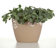 Domestic plant in flowerpot Stock Photo
