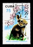 Domestic Rabbit (Oryctolagus cuniculus domesticus), Year of the. MOSCOW, RUSSIA - NOVEMBER 25, 2017: A stamp printed in Cuba shows Domestic Rabbit &# Royalty Free Stock Photo