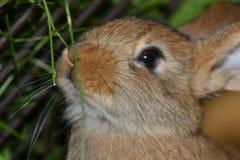 Domestic rabbits Stock Photo