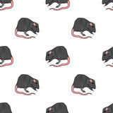 Domestic Rats Seamless Pattern Royalty Free Stock Photography