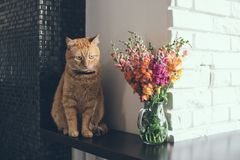 Domestic red cat. With a bouquet of flowers in a modern home interior Stock Images