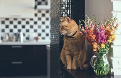 Domestic red cat. With a bouquet of flowers in a modern home interior Royalty Free Stock Photo