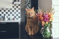 Domestic red cat. With a bouquet of flowers in a modern home interior Royalty Free Stock Photography