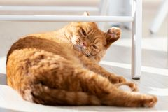 Domestic red cat r in a modern home interior stock images