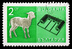 Domestic Sheep (Ovis ammon aries), Stables, Economic achievements serie, circa 1967 royalty free stock images