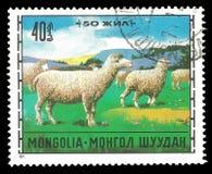 Domestic Sheep Ovis ammon aries stock photo