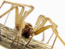 Domestic spider stalking prey. A domestic spider stalking prey Royalty Free Stock Photos