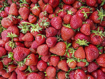 Domestic strawberries Royalty Free Stock Images