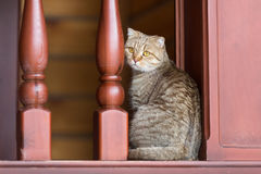 Domestic tabby cat in home interior Stock Photo