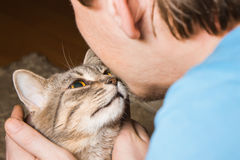 Domestic tabby cat and man Royalty Free Stock Photo