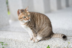 Domestic tabby cat Stock Photos